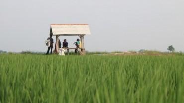 Pemberdayaan Agraris